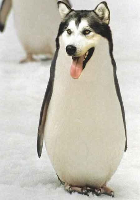 Dog or Penguin picture
