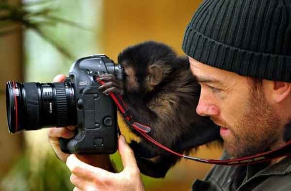 Monkey Photographer picture