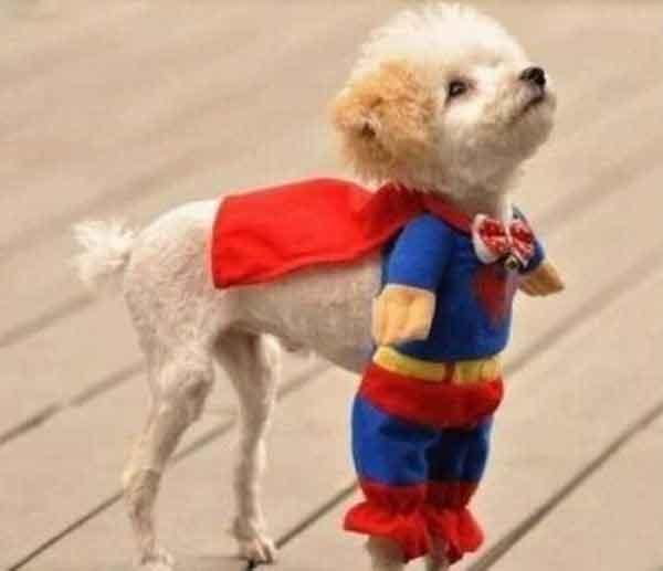 Little Superman picture