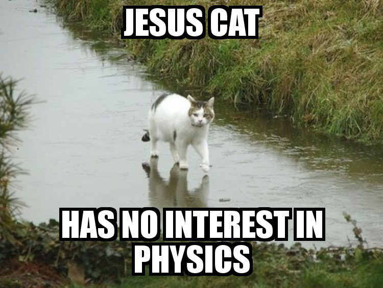 Jesus Cat picture