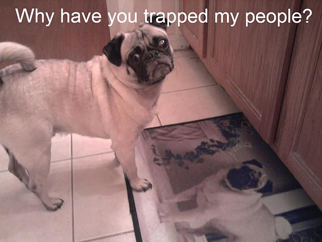 Lol Pug picture