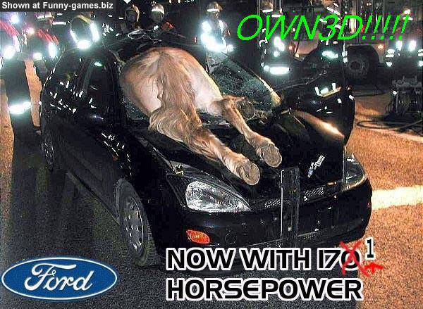 Focus Horseovned picture