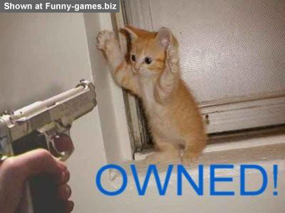 Kitten Owned picture