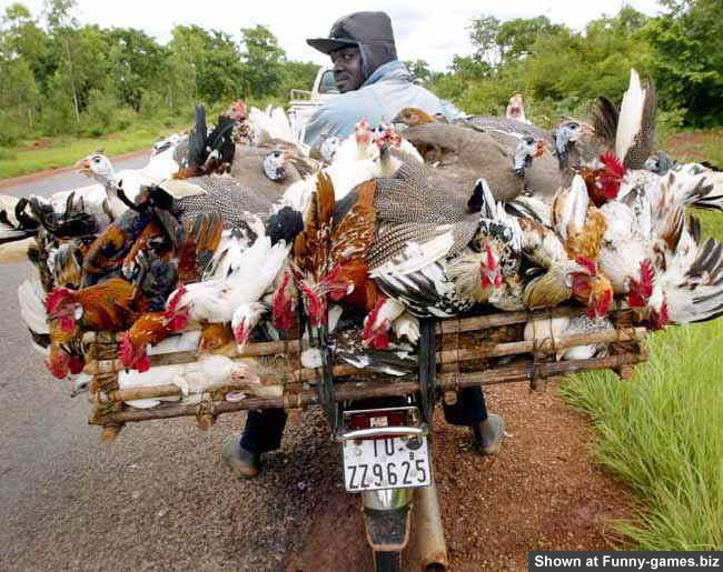 Cocks On Bike picture