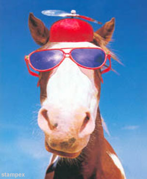 Funny Horse Hat picture