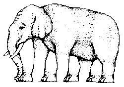 Elephant Legs picture