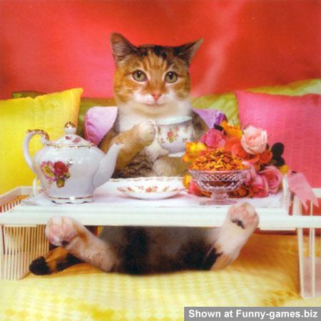 Funny Cat Birghday picture