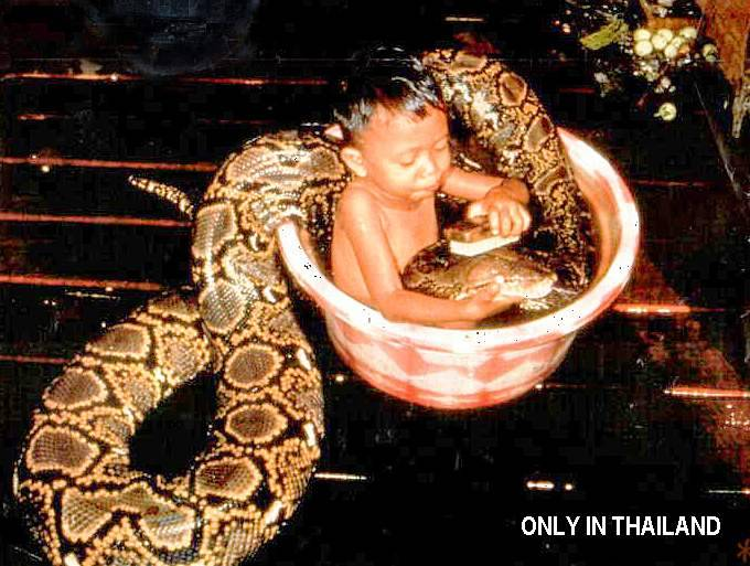 Only In Thailand picture