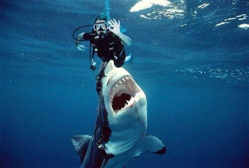 Hazardous Diving picture