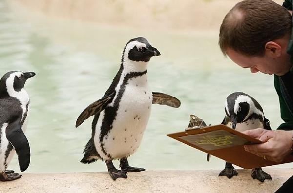 Pinguin Can Read picture