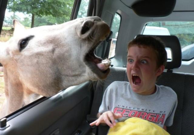 Horse Says Hallo picture