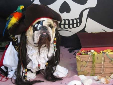 Pirate Dog picture