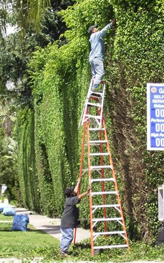 Ladder Stacking picture