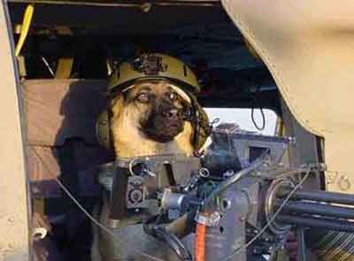 Doggy Soldier picture
