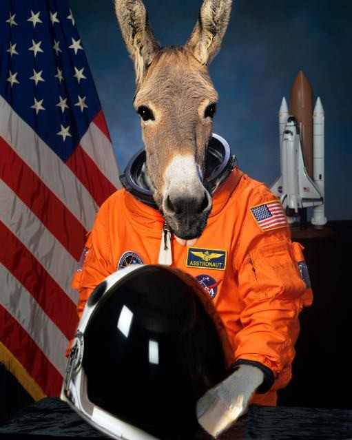 Donkey Asstronaut picture