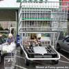 Have a look at a new racing cart funny car pics