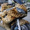 wild lady's bike
