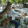 funny dog transportation