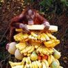 how can I eat sooo many bananas