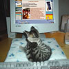 Funny pics and jokes kitten watching a bed time story on PC