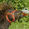 this horse is real beer loving animal