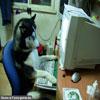 Funny pet photos unusual compute addict