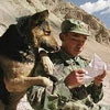 a soldier and his dog read letter from their loved ones