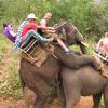 it seems everyone, even the elephants, enjoy this ride