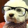 This hipster dog does not care if you like him or not. Deal with it.