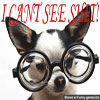 Funny dog pictures small doggy with huge glases