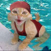 cat enjoys the water in the pool