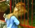 Lion Kisses Rescuer