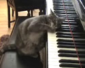 cute kitty playing on the piano