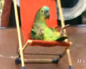 Sporty Parrot