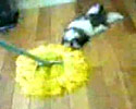 house maid just get a new helper