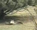 rabbit provokes a snake
