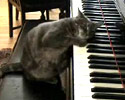 this pussy can play the piano